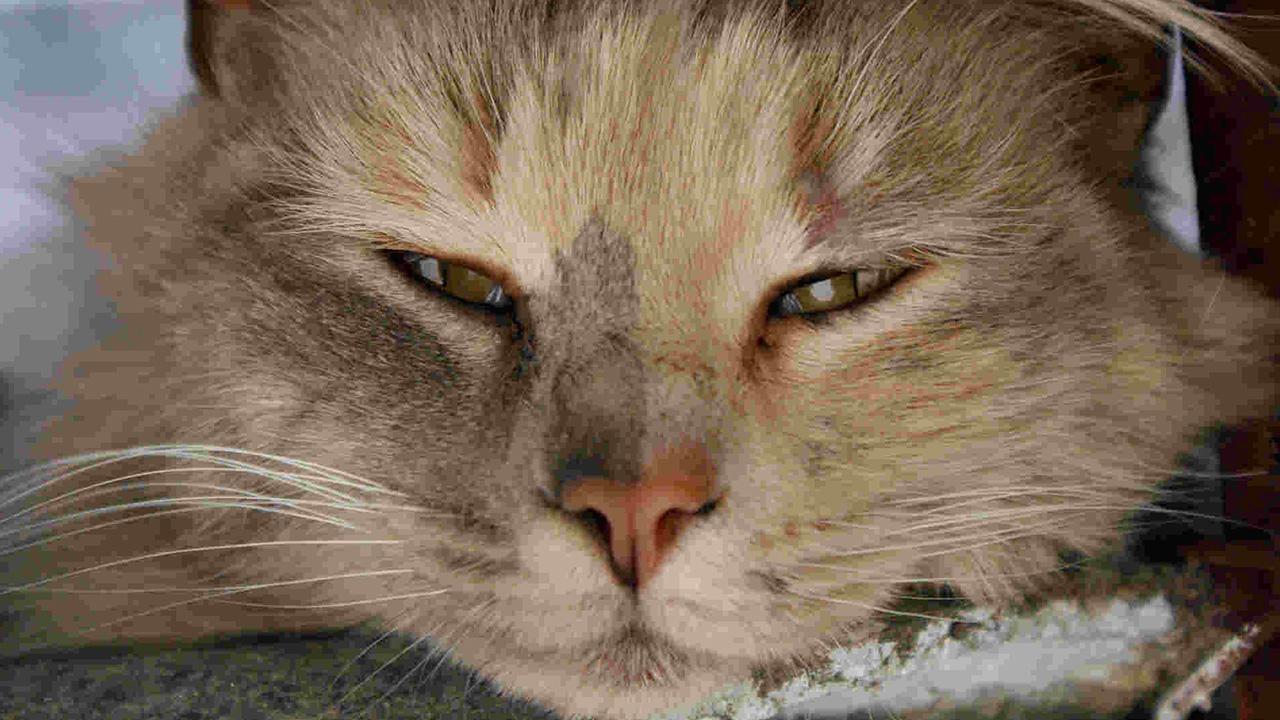 chaton qui pleure