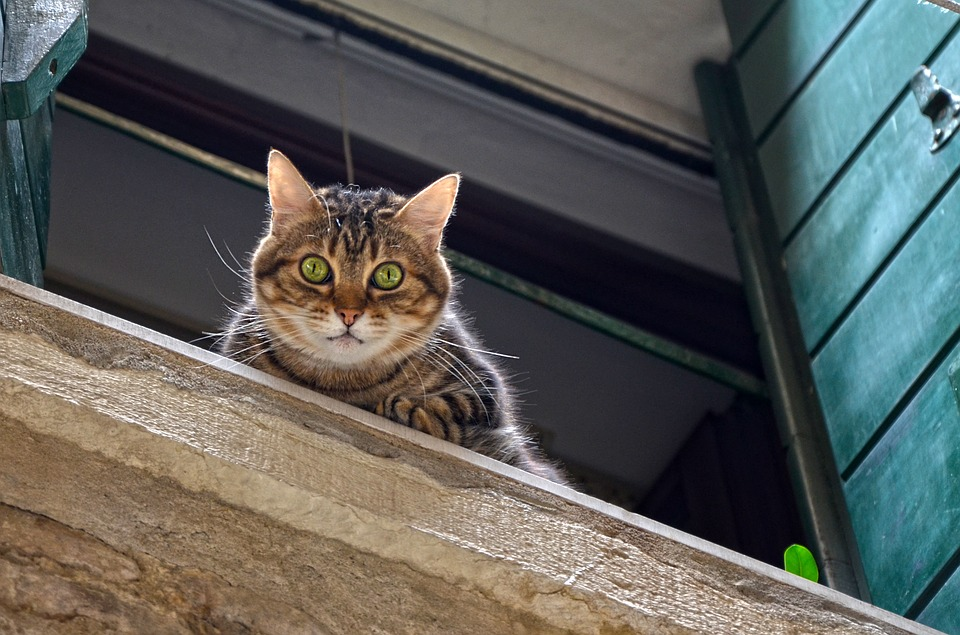 chute de balcon chat