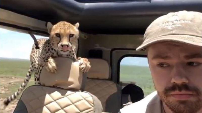 guépard tanzanie safari