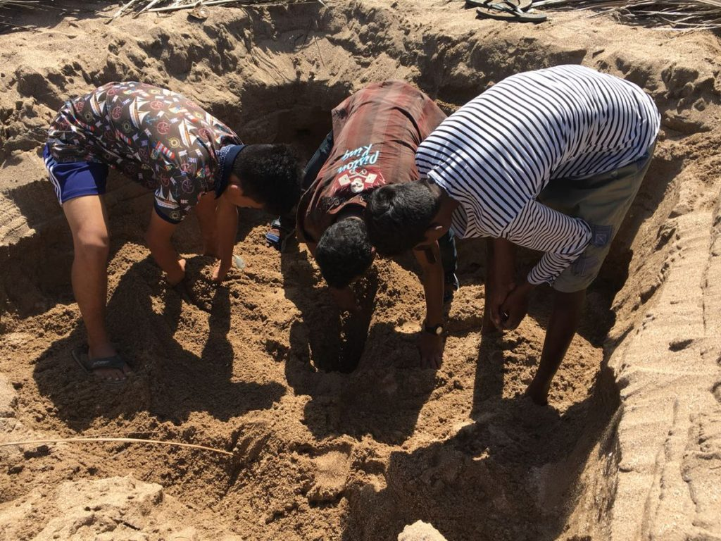 tortues plage Bombay