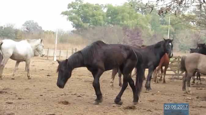 viande chevaline argentine