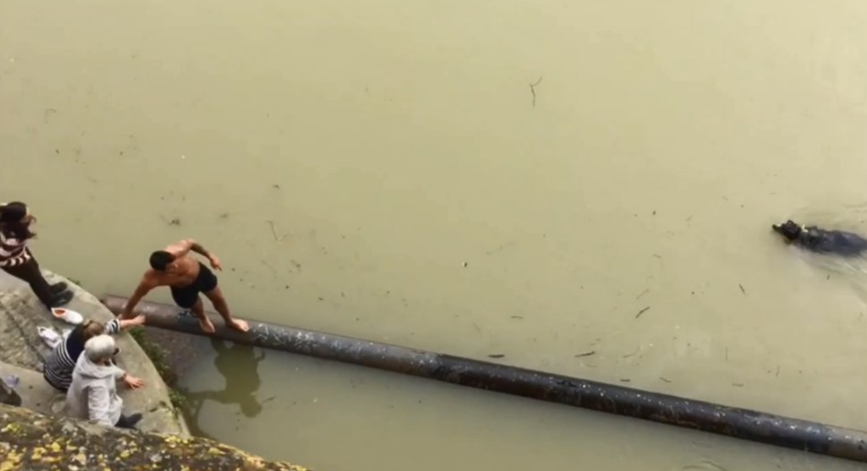 chien sauvé noyade