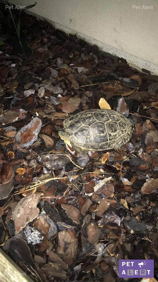 tortue perdue