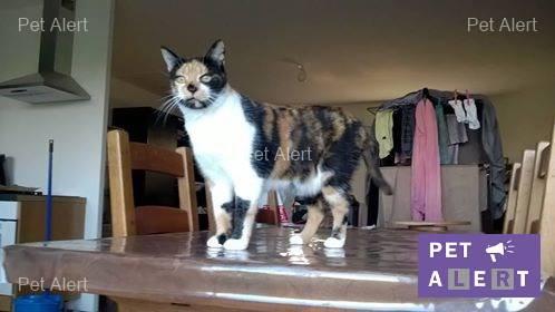 chatte de gouttière