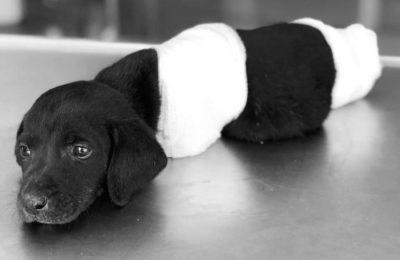 chien démembré turquie