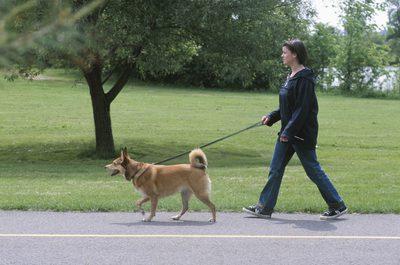 chien marchant en laisse