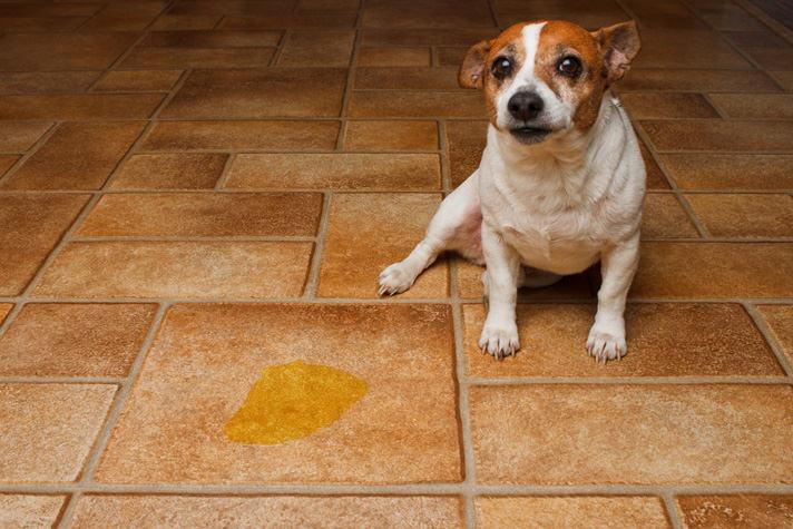 chien non propre