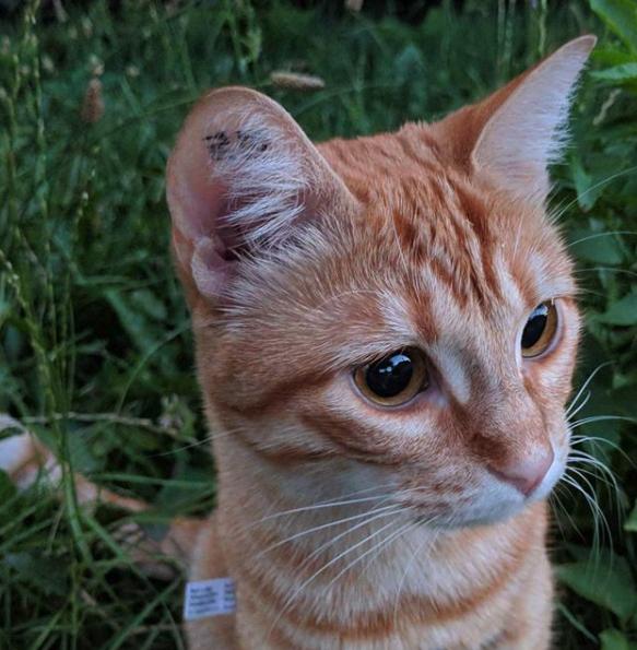chat tatoué