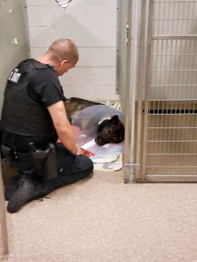 Greg Shone reste aux côtés de son chien