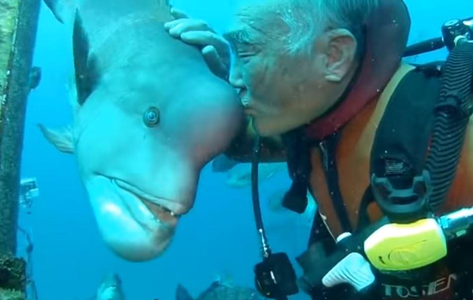 fish-friend-japan-1