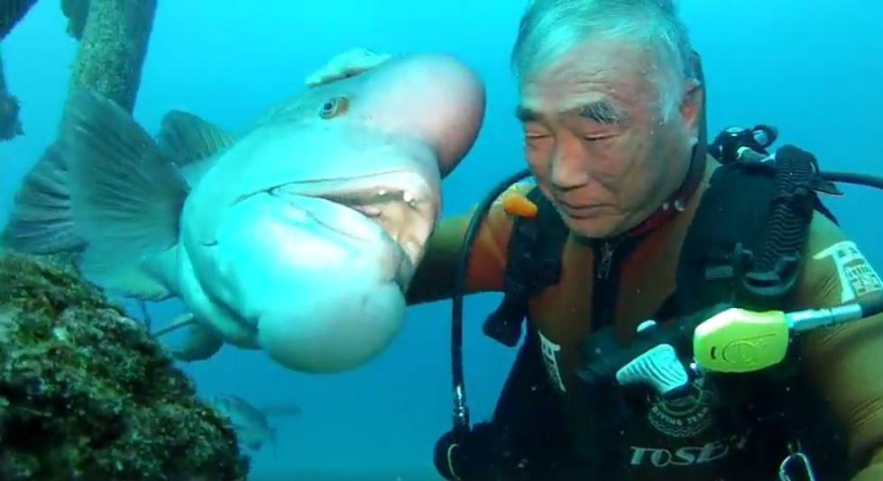 fish-japan-8