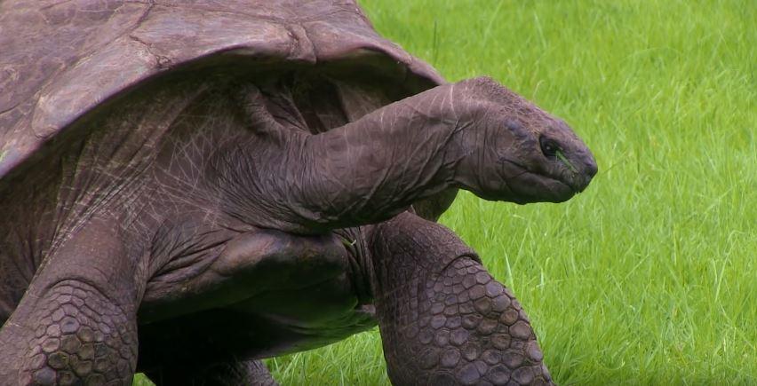 tortoise-oldest-1