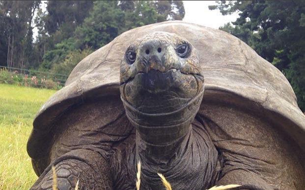 tortoise-oldest-8