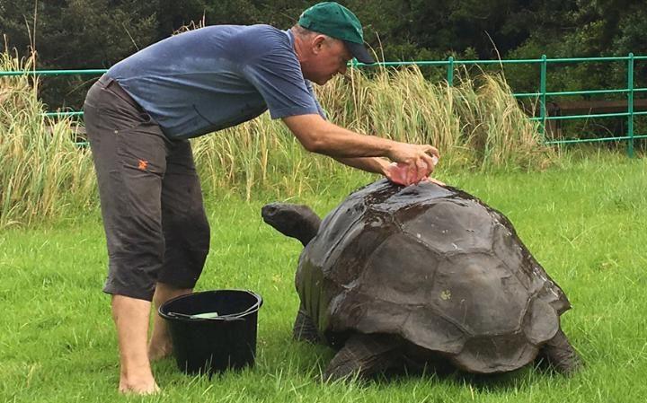 tortoise-oldest-9