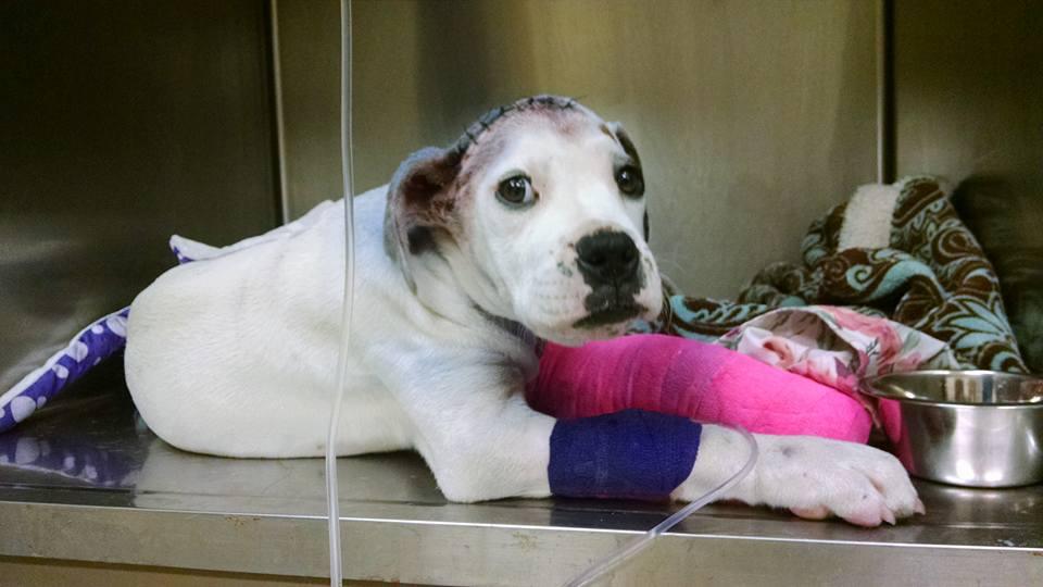 boxer-shot-rescued1