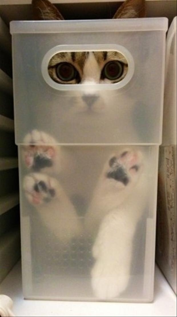 cat-hide-seek-7