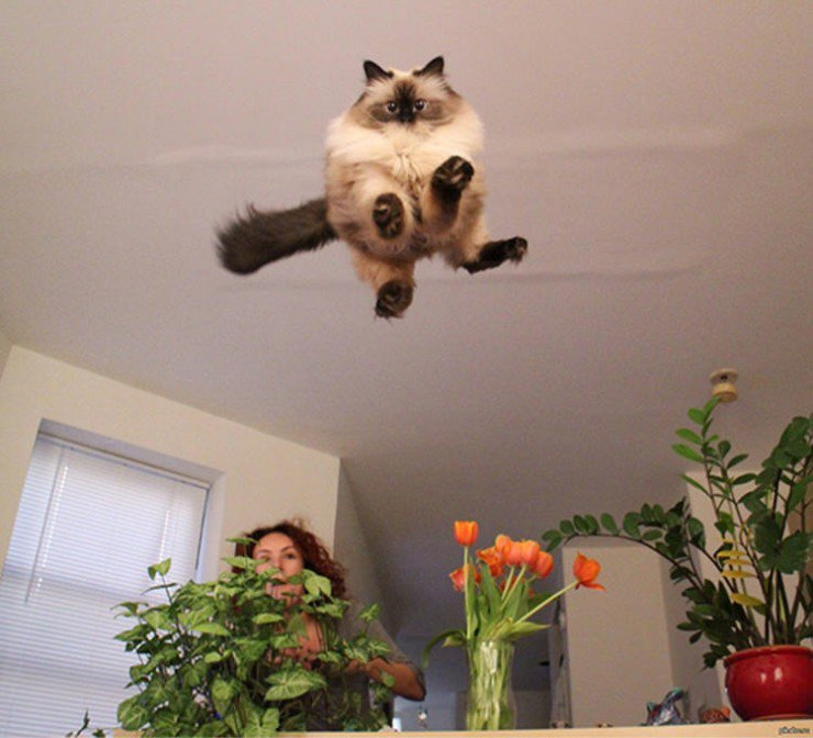 cat-perfect-time-12