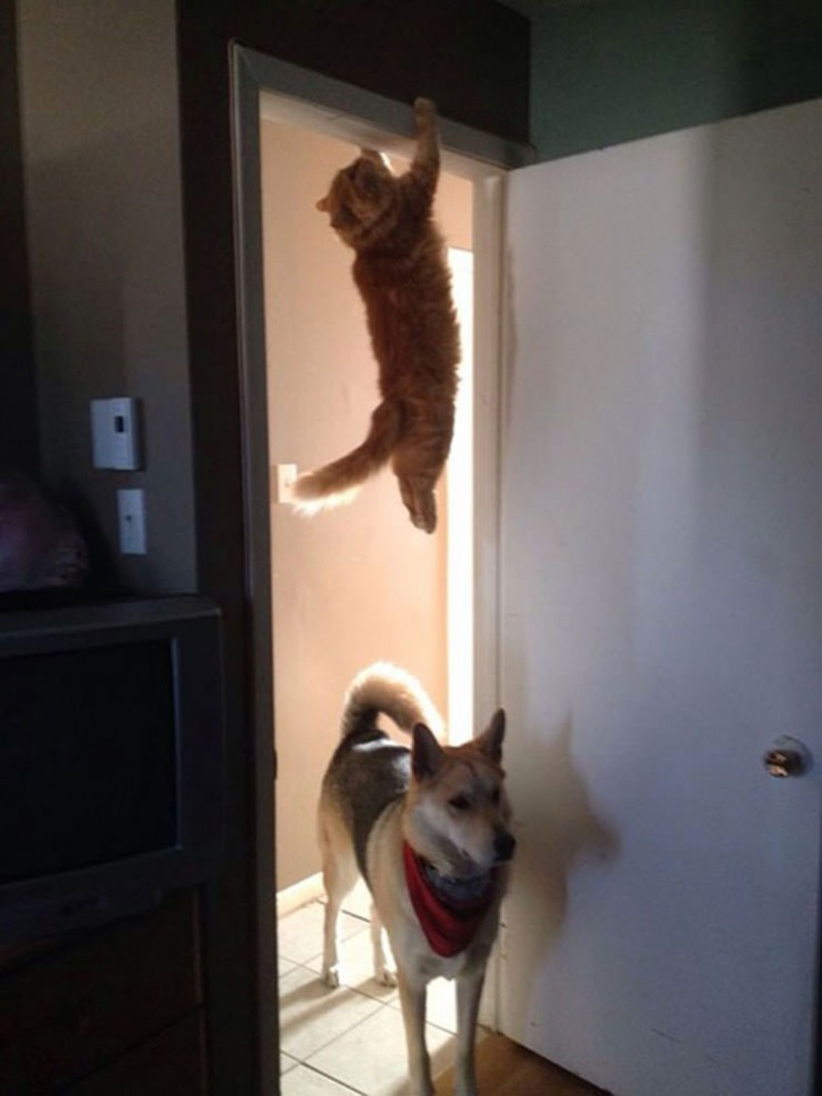 cat-perfect-time-3