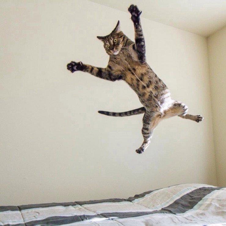 cat-right-moment-1