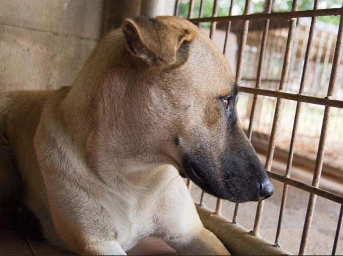 cane-macello-salvato-1