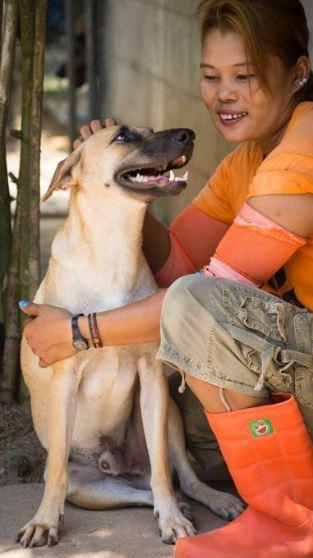 cane-macello-salvato-3