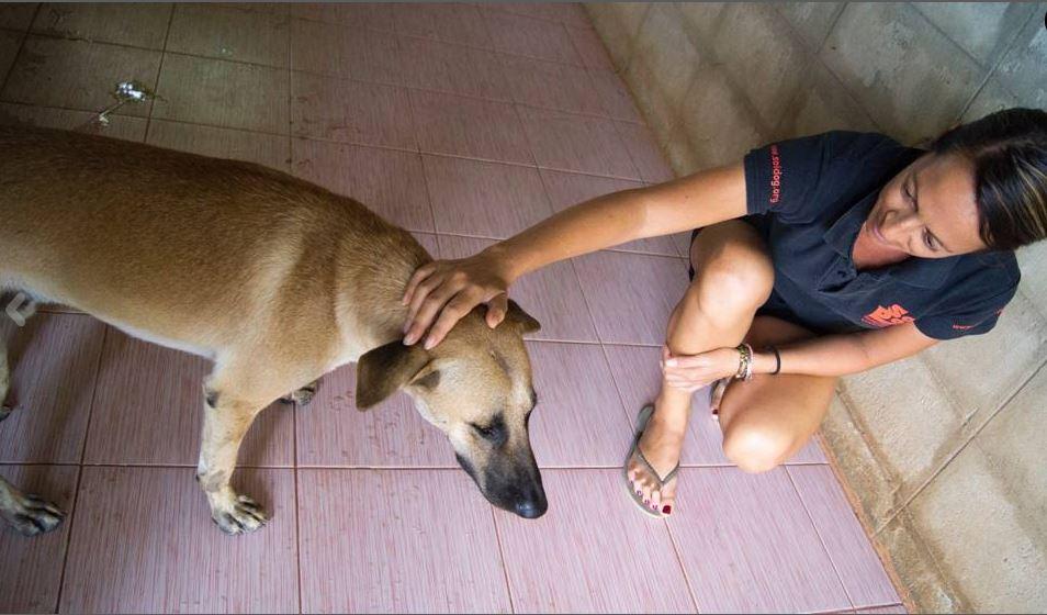 cane-macello-salvato-4