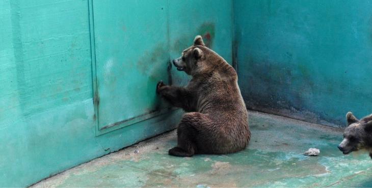 bear-zoo-italy-cover