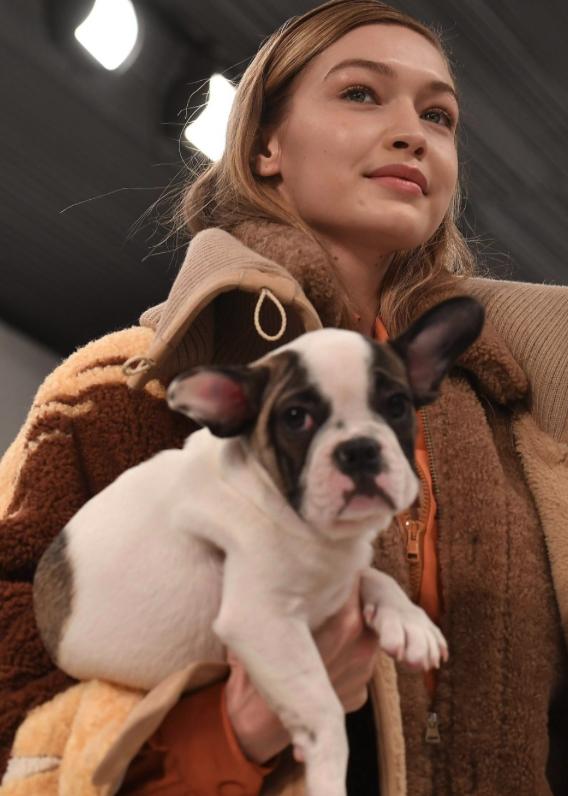 Gigi Hadid chien
