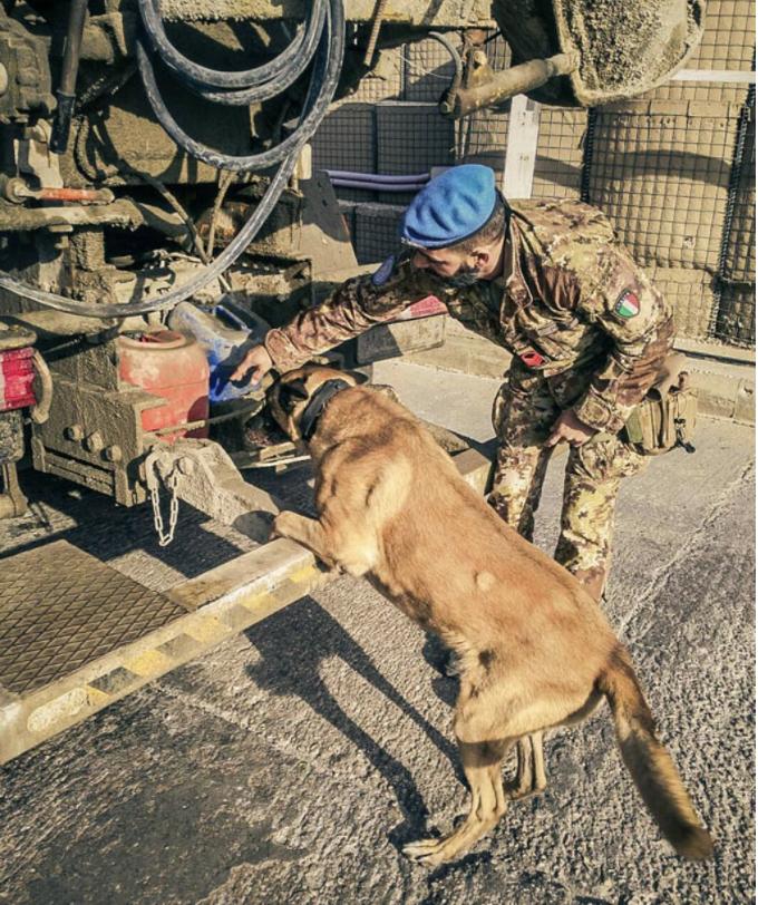 jimmy chien héros