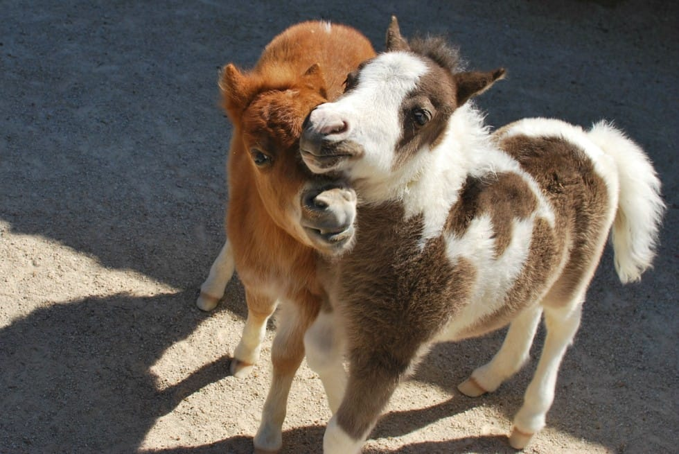 13 Baby Horses You Won T Believe Are Real