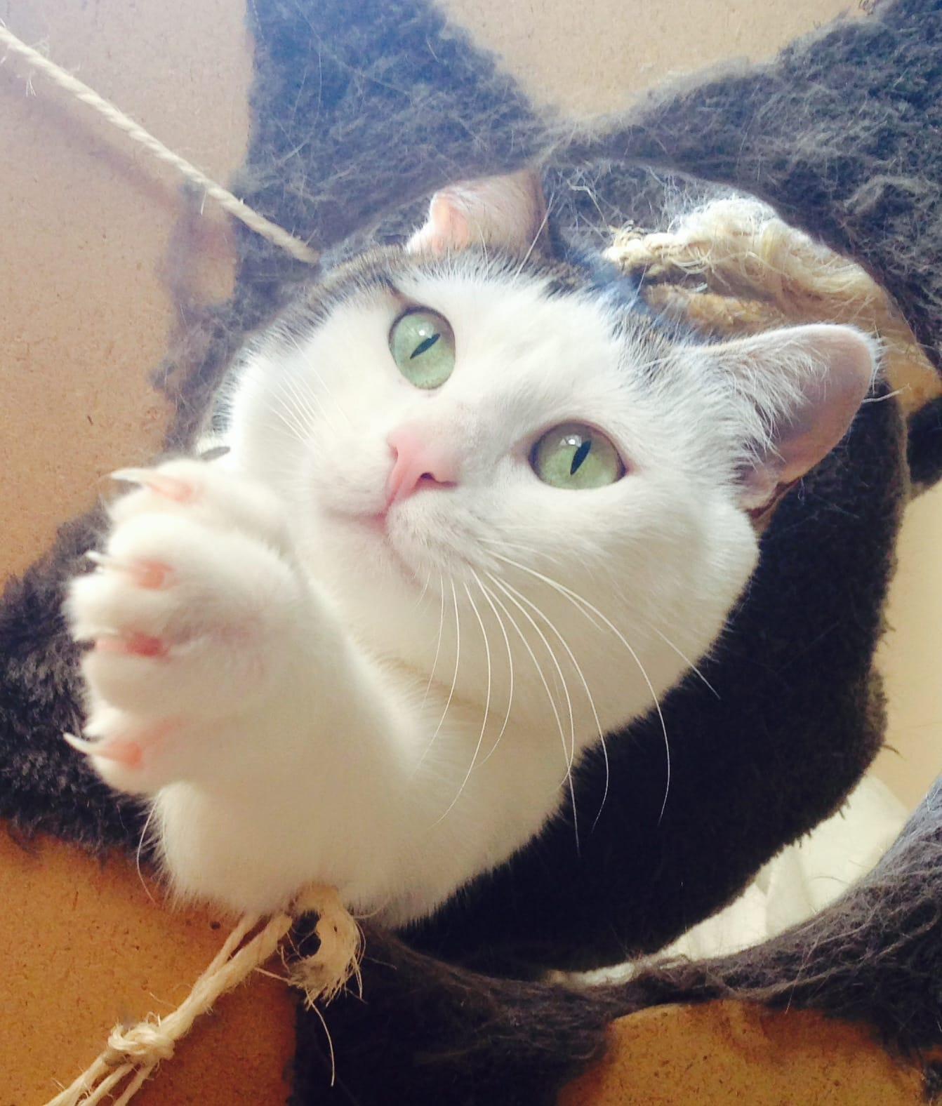 cat-claw-4
