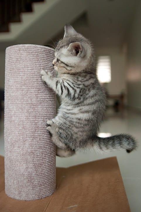 cat-claw-8