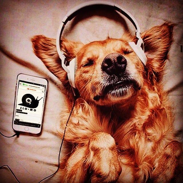 dog-classic-4