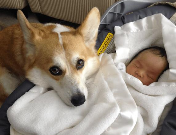 baby-vs-dog-10