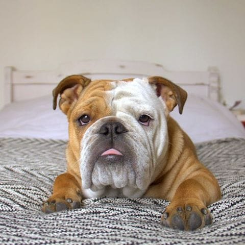9 Of The Most Challenging Breeds For First Time Dog Parents