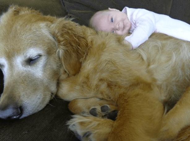 dog-n-baby-12