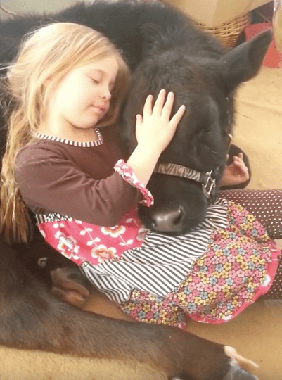 girl-baby-cow-5