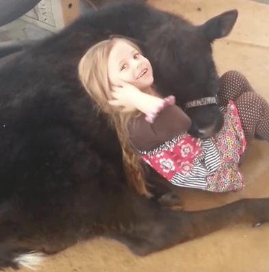 girl-baby-cow-7