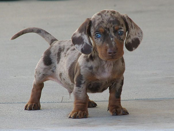 mixed-breed-dogs-17 2
