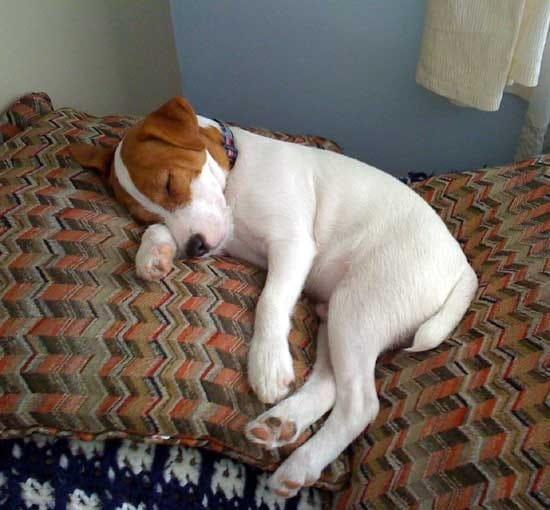 JR-sleeps