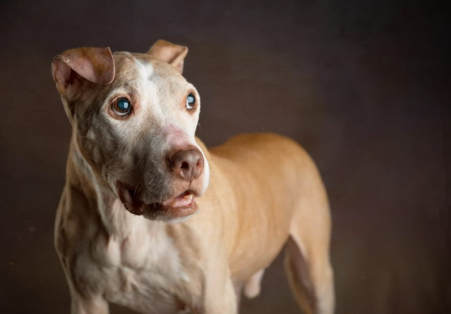 Project-rescues-senior-dogs-from-shelters-and-covers-all-medical-expenses-for-their-lives12__880