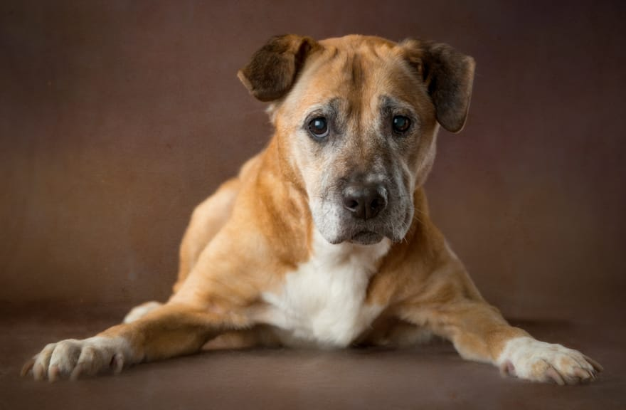 Project-rescues-senior-dogs-from-shelters-and-covers-all-medical-expenses-for-their-lives15__880