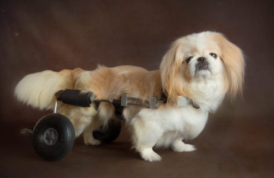 Project-rescues-senior-dogs-from-shelters-and-covers-all-medical-expenses-for-their-lives6__880