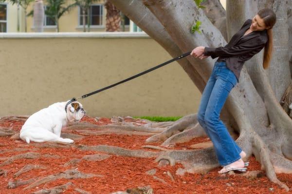 dog-leash-pull
