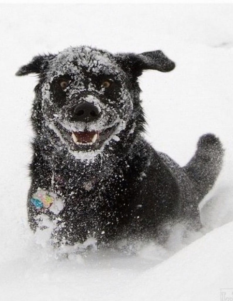 winter-dog-3
