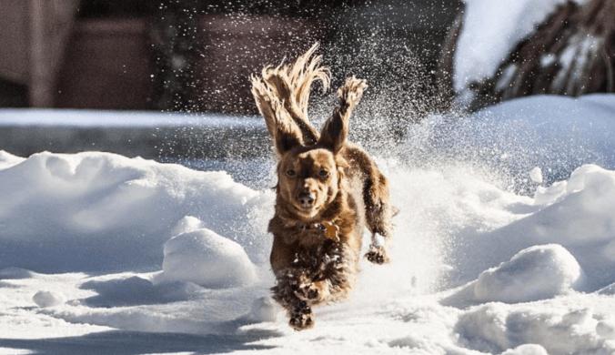 winter-dogs-15
