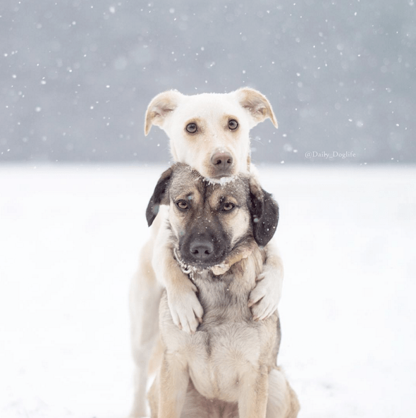 best-dog-5