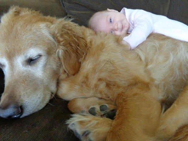 best-dog-ever-1