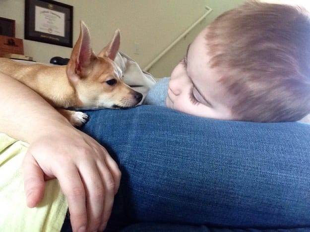 best-dog-ever-4
