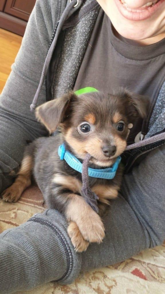 best-dog-ever-5